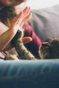 Cat photo courtesy Jonas Vincent - unsplash.com