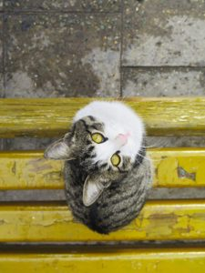 Cat picture by Frederico Diliberto