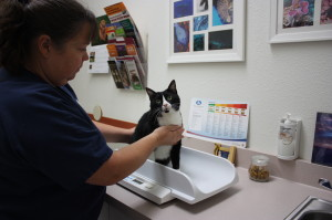 Feline Health Exams in Tucson, Arizona