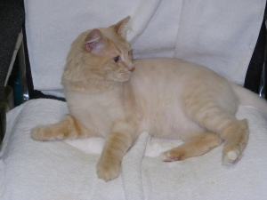Packy the Cat at Encanto Pet Clinic, Tucson Veterinarian