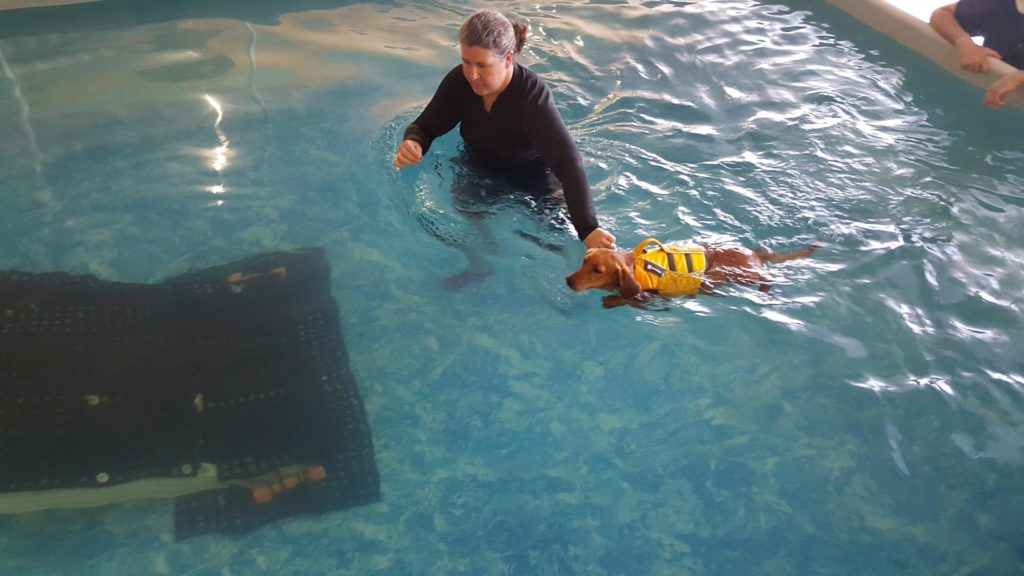 Scooter learns to swim - photo courtesy Tina Ireland
