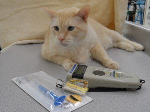 CG is so happy his people care enough to give him a microchip.
